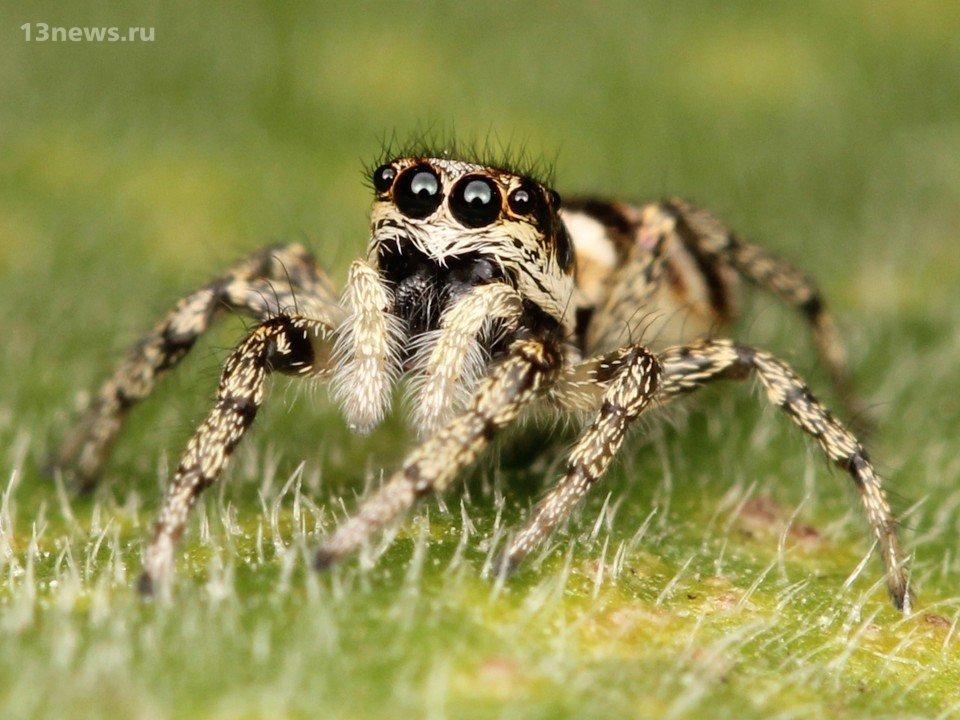 6 жутких фактов о пауках