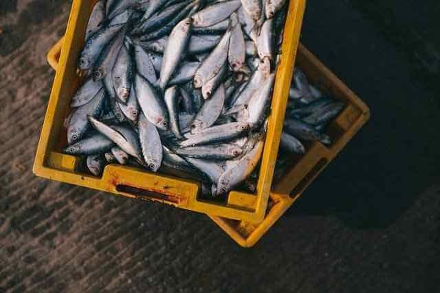 Eat This, Not That!: употребление рыбы 2 раза в неделю положительно сказывается на здоровье людей